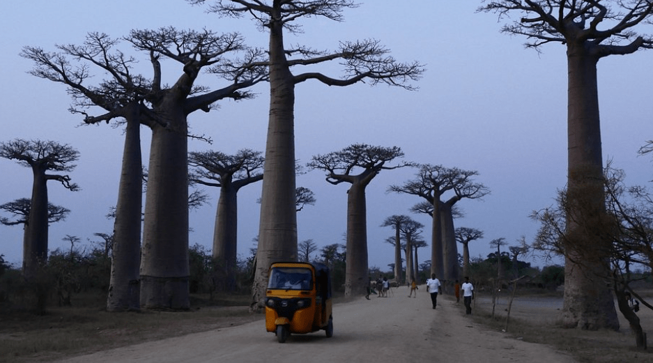 Capture Baobabs of Madagascar